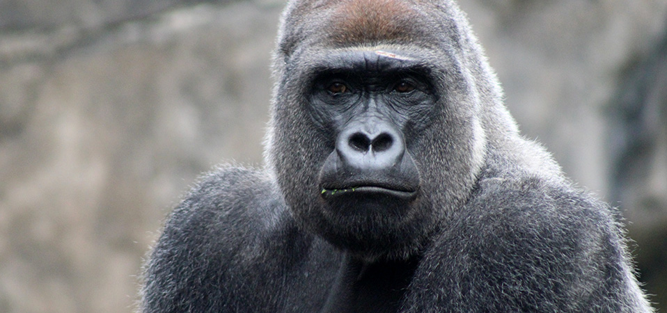 "How to battle AND beat the 800 pound ""gorillas"" in the rental business"